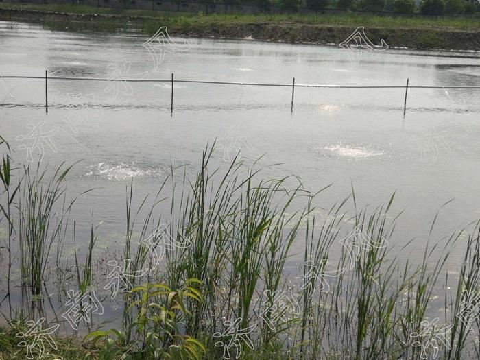 水产养殖罗茨鼓风机